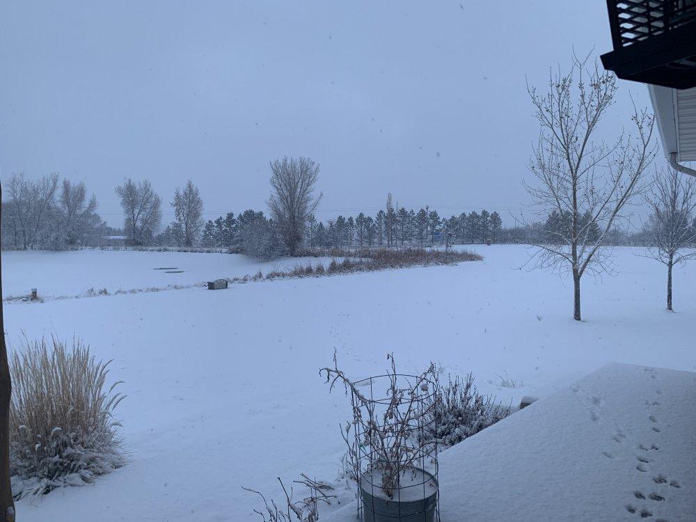 morning snow 002.JPG
