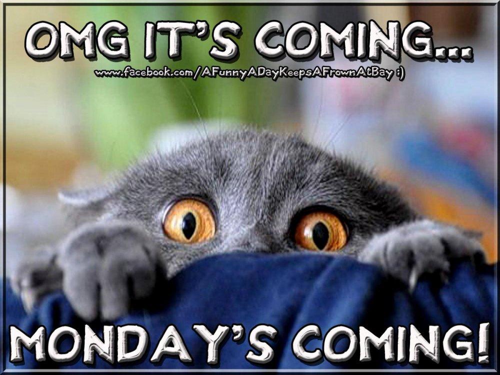 OMG Mondays Coming CFQnqKoUgAAObPq.jpg