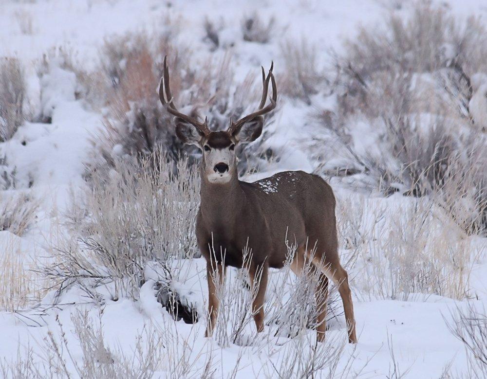 Buck1-25-20a.jpg