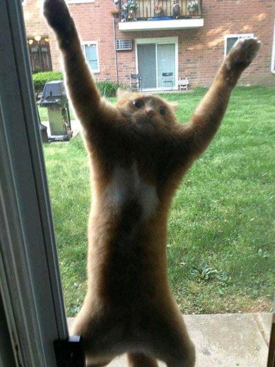 help kitty.jpg