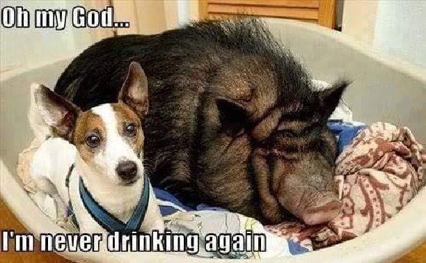 I am never drinking again.jpg