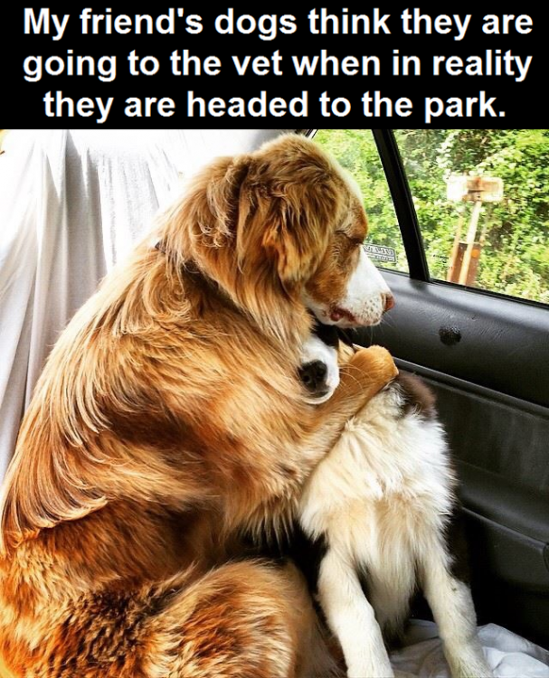171462-Dogs-Think-They-Are-Going-To-The-Vet.png