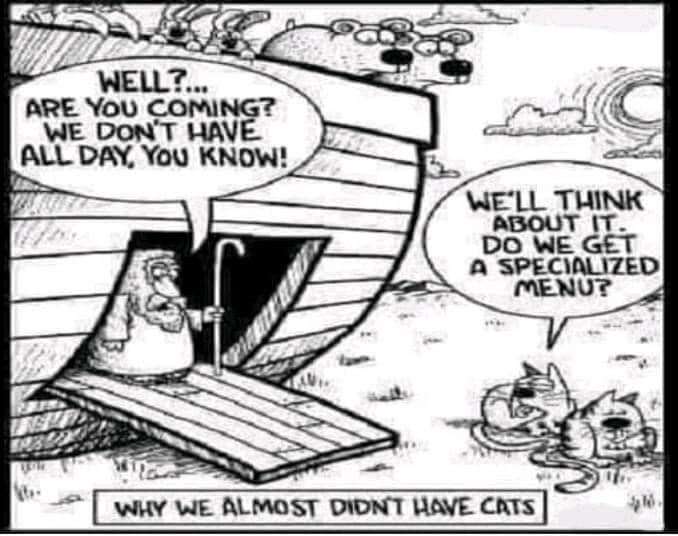 bad cats.jpg