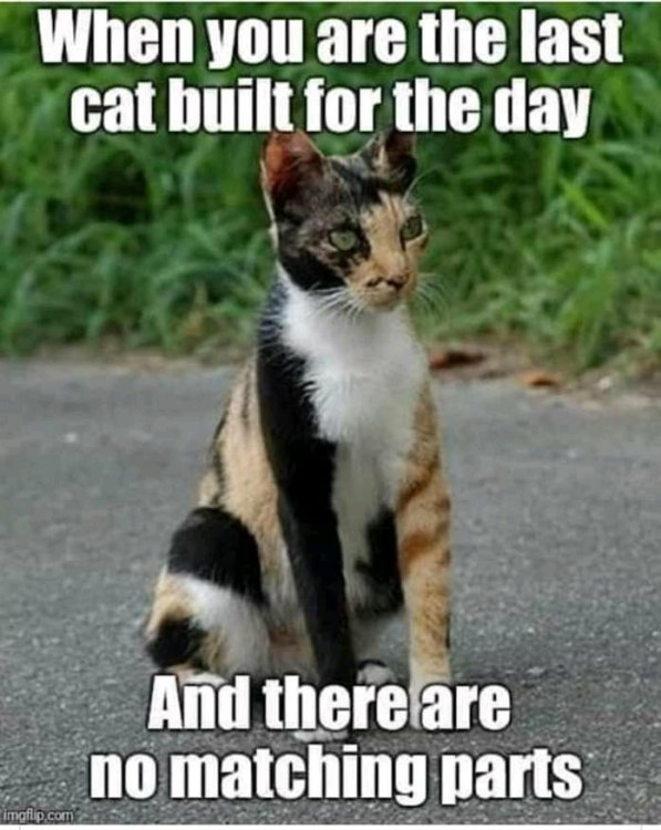 mixed cat.jpg