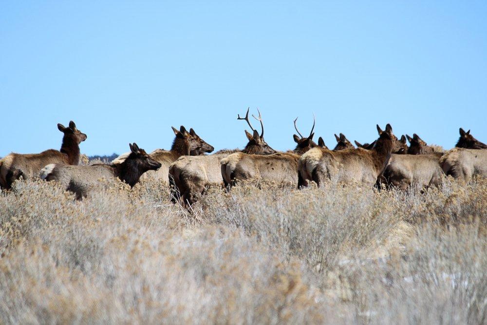 Elk2-11-21.jpg