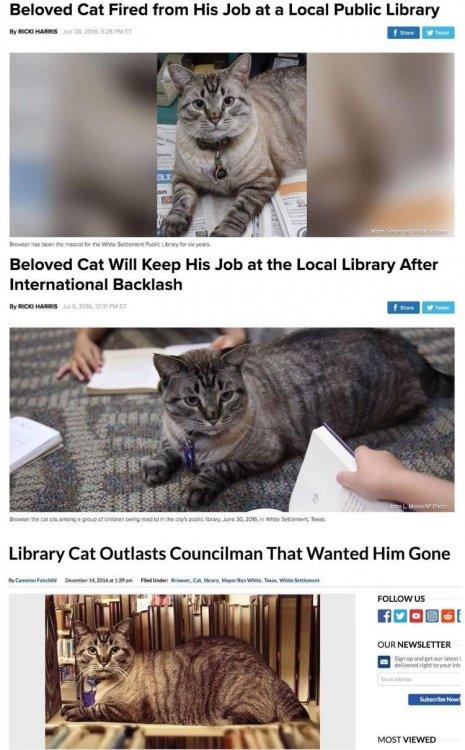 librarycat.jpg
