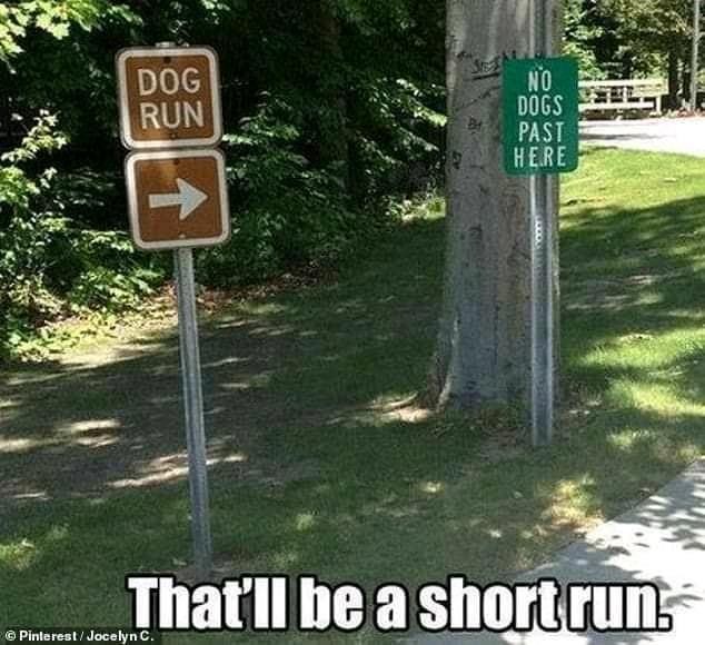 dog run.jpg