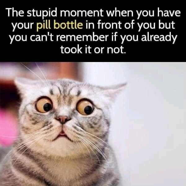 pill cat.jpg