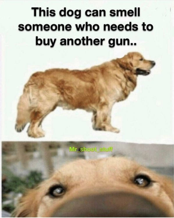 Dog Smells People who need another gun nstagram.jpg
