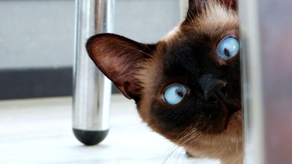 cross eyed cat.jpg