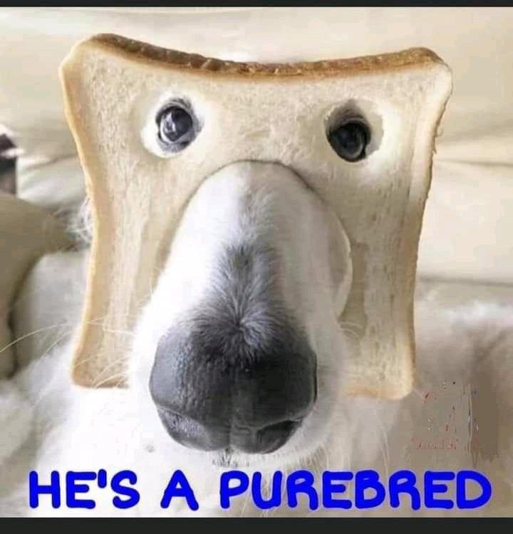 purbred dog.jpg