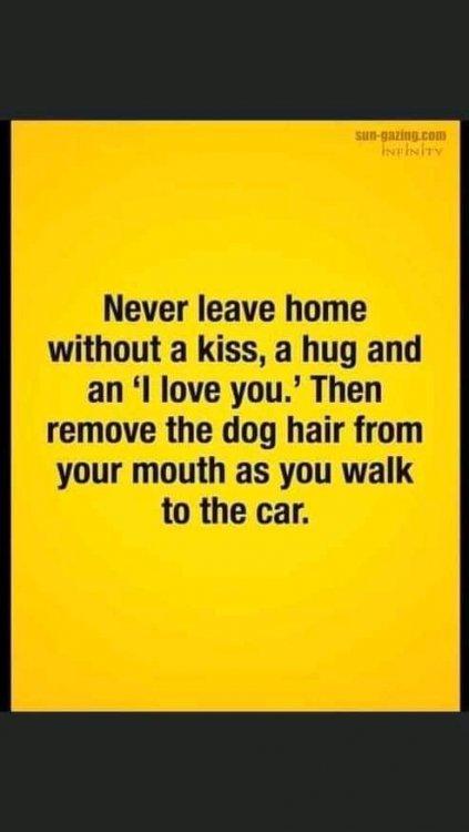 Kiss the dog.jpg