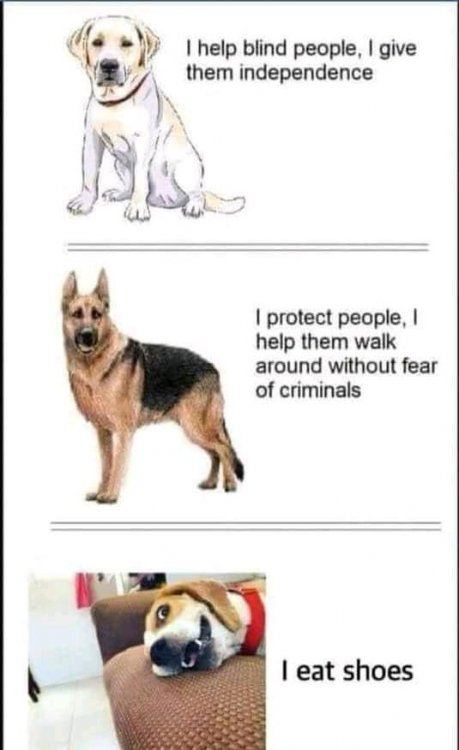 funny dog.jpg