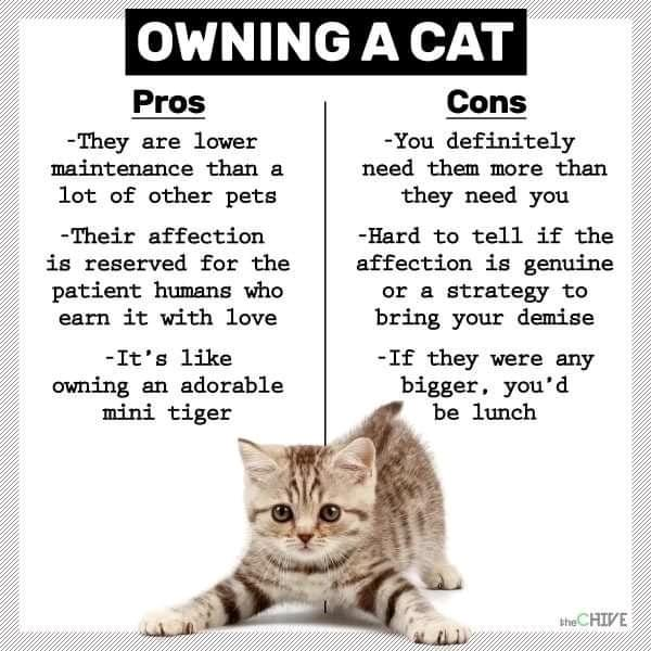 owning a cat today.jpg