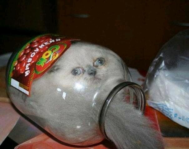 Dumb cat.jpg
