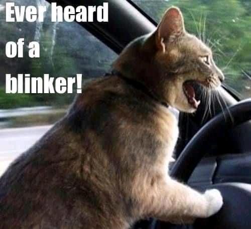 blinker cat.jpg