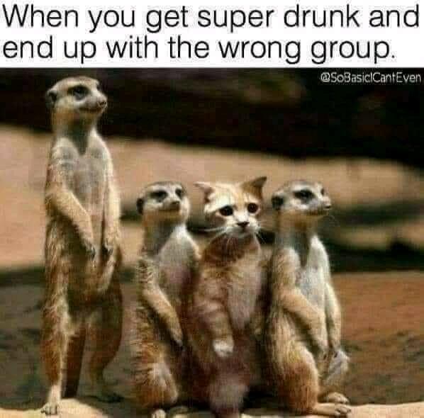 drunk cat.jpg
