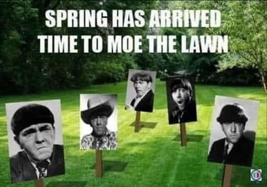 Moe_the_lawn_jpg-1883376.jpg