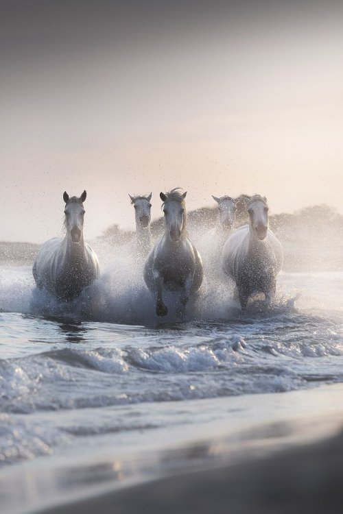 Winners-of-Tokyo-International-Foto-Awards-Show-Us-The-Marvels-of-Nature-Through-Their-Own-Eyes-6059b56a6807b__880.jpg