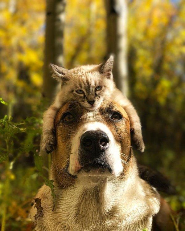 cat-dog-travel-together-henry-baloo-11.jpg