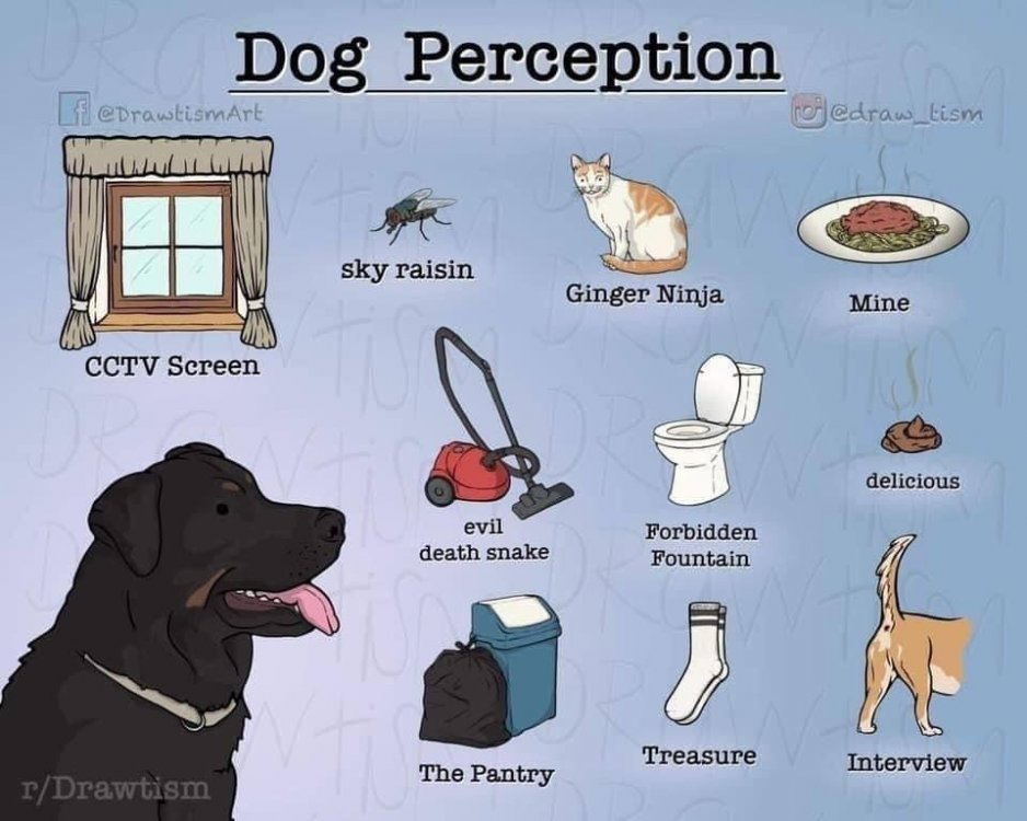 dogperceptions.jpeg