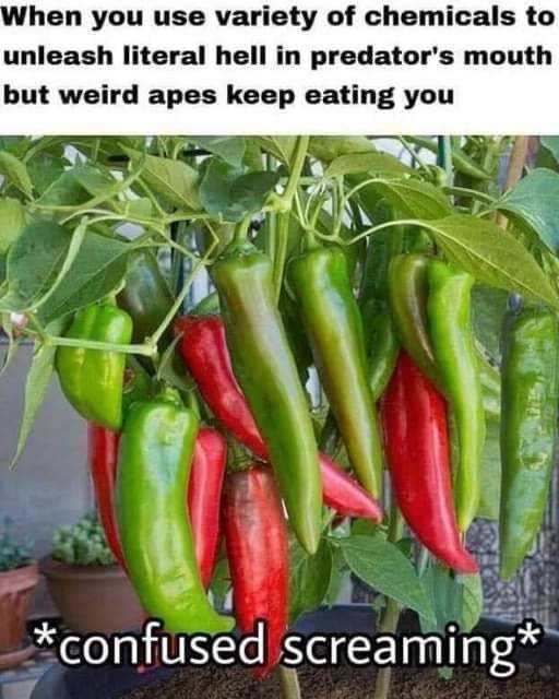 pepperconfusion.jpg