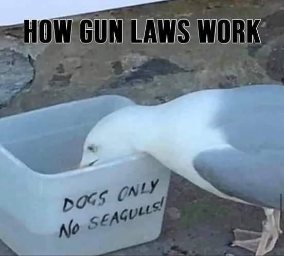 seagulls.jpeg