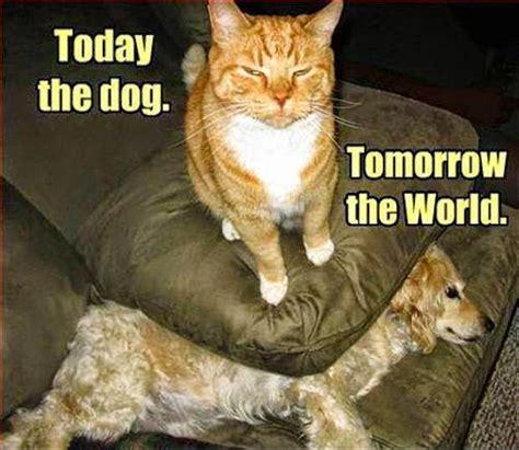 todaythedogcat.jpg