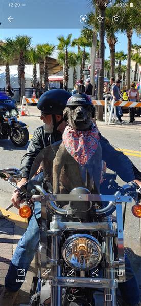 dog bike.jpg