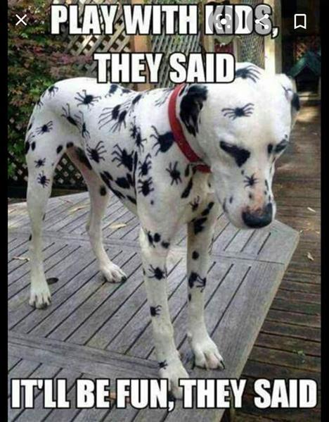 spider dog.jpg