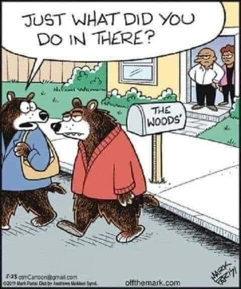 bear in the woods.jpg