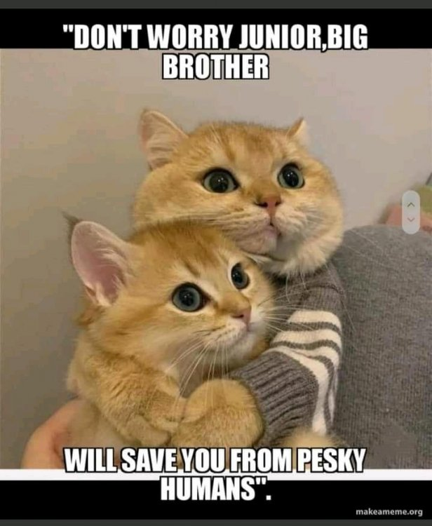 brother cat.jpg