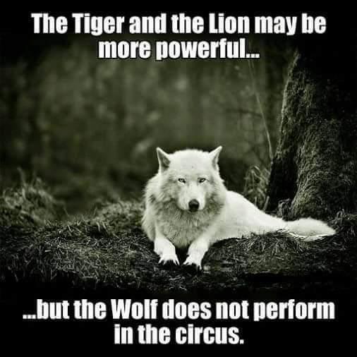 wolf in a circus.jpg
