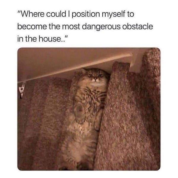 stair cat.jpg