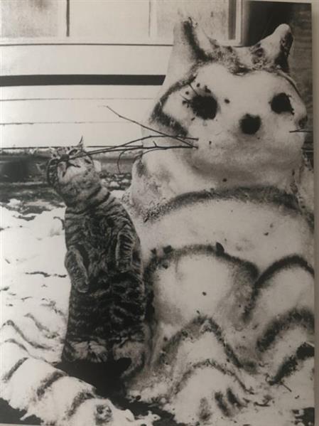 snow cat 2.jpg