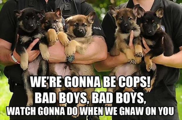 police puppies.jpg