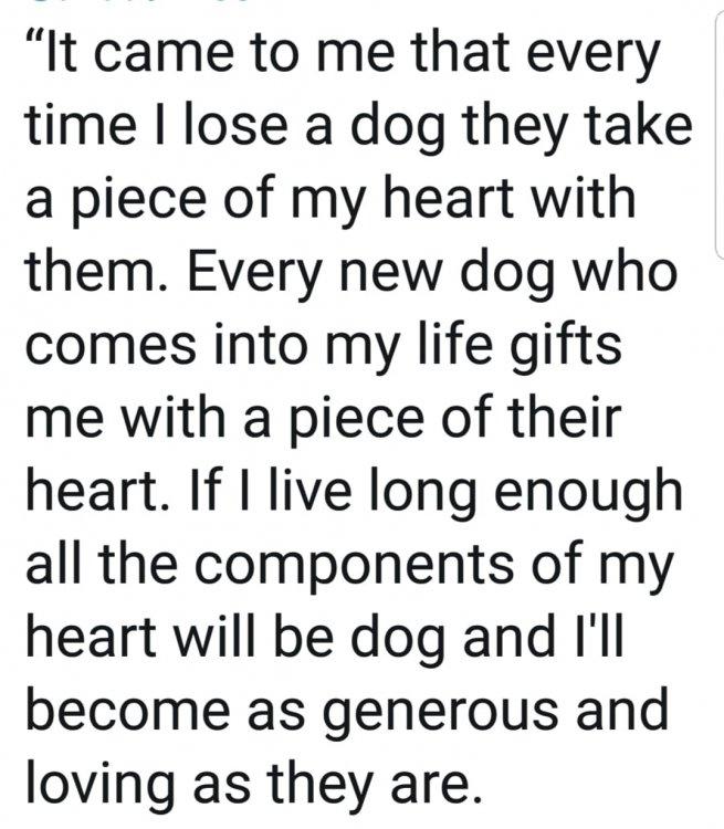 Dog Heart.jpg