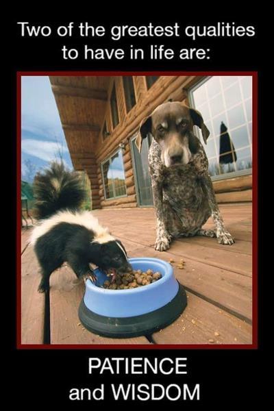 skunk eaten.jpg