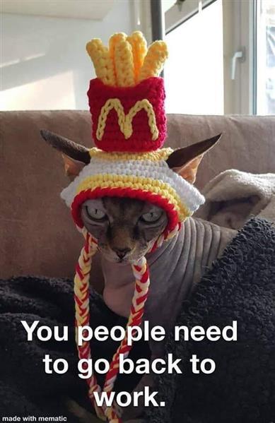 mc cat.jpg