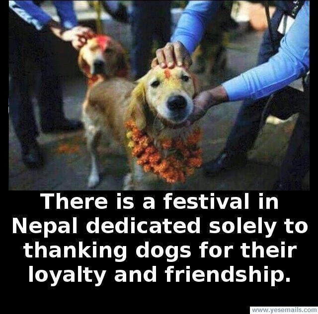 Dog Festival (1).jpg