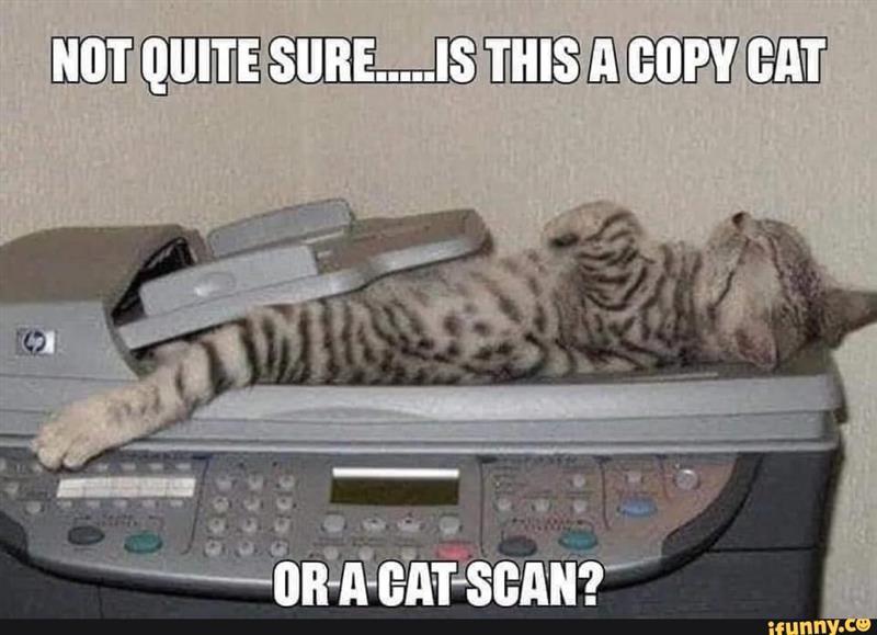 copy cat.jpg