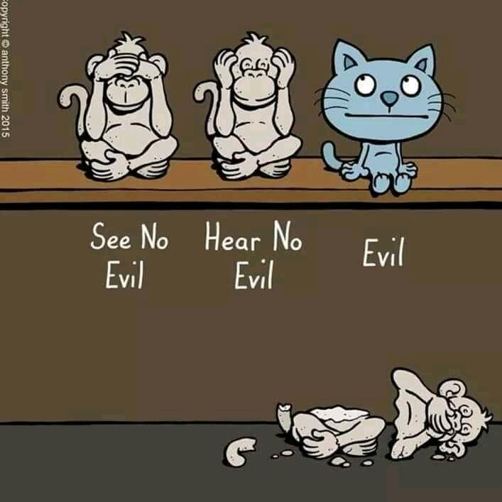 evil cat.jpg