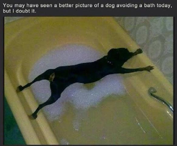 No Bath Today.jpg
