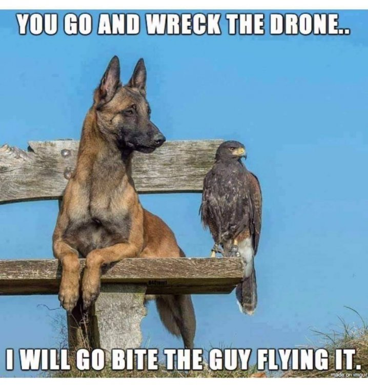 Drones with Dog and Hawk 280.jpg