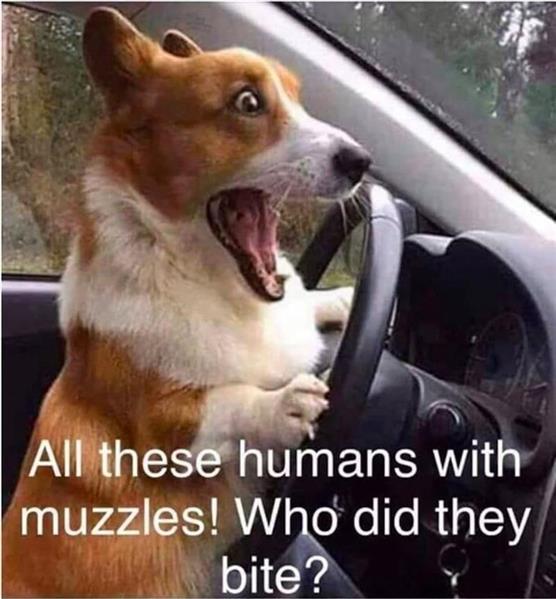 driving dog.jpg