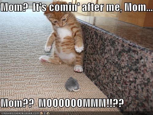 Cat Scaredy Cat .jpg