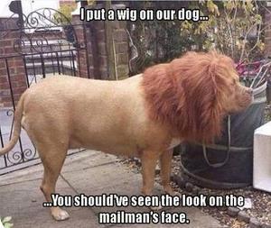 wig dog.jpg