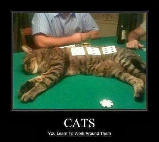 Cats.jpg.c89a13641578c365d5fd46074a58e01c.jpg