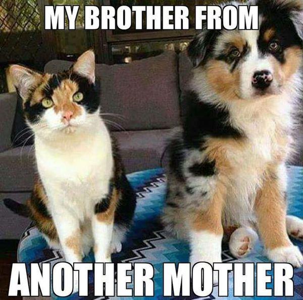 catdogcoloredsame.jpg
