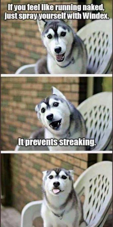 dogpreventsstreaking.jpg